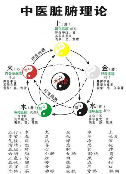 五脏六腑指什么 中医五脏理论