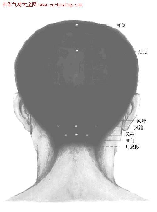 人体穴位总图