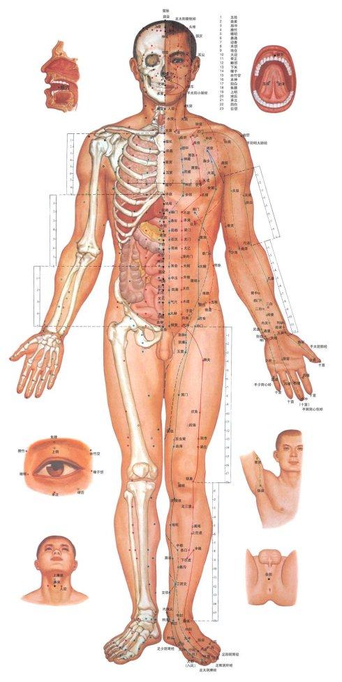 人体穴位图-正面
